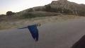 새를 키웠더니 남다른 산책을