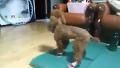 우리 집 강아지 신발 시승식