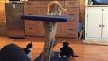 새끼 고양이의 험난한 여정