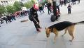 길거리에서 개와 드리블 대결
