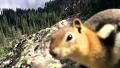 붙임성 하나는 끝내주는 다람쥐