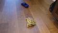 거북이 속도를 향상시키는 법