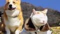 햇볕 아래 노곤노곤한 강아지와 고양이