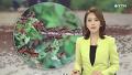 수십억 메뚜기떼…수확 앞둔 농민 '어쩌나'