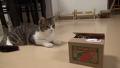 고양이가 시선 강탈당한 이유