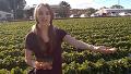 딸기농장 체험한 호주의 미녀