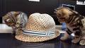 모자 하나까지 즐거운 고양이들