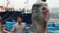 바다의 로또, 개복치가 나타났다