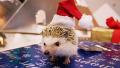 크리스마스, 사람만 즐기나요?