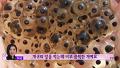 북한 주민들이 배고파 먹는 음식