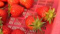 억대 매출 딸기농장의 특별함?