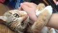 주인의 손길이 너무 좋은 고양이