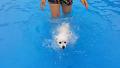 살기 위한 강아지의 파워 수영