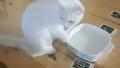 고양이의 물 먹는 방법 독특해