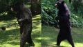 두발로 걷는 직립보행 곰