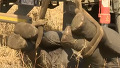 아프리카에서 코끼리 옮기는 법
