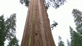 화면에 담지 못하는 나무의 크기