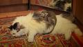 아기 원숭이와 고양이의 동거