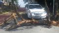 차를 덮친 썩은 나무 가해자는?