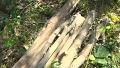 평범해 보이는 나무가 식초로