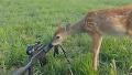 협상을 하러 온 귀여운 사슴