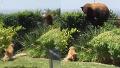 곰에게는 평생 잊지 못할 굴욕