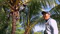 김병만도 인정, 수준급 나무 타기