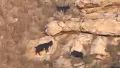 생태계 파괴하는 야생 동물 정체