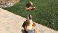 받아먹기 진수 보여주는 개
