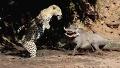 멧돼지 외모에 사냥 기분 잡침