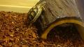 등반하고 싶은 거북이의 결말