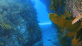 열대 바다 못지않은 독도 바다