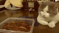 매운 음식만 훔쳐 먹는 고양이