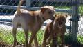 치타와 강아지 베프가 된 사연
