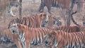 백두산 호랑이 사육 현장