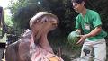 클래스가 다른 하마의 수박 먹방