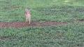 아기 사슴 갑자기 찾아온 이유