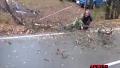 나무 자르다 봉변 당한 사람