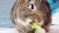 괜히 보게 되는 토끼의 먹방