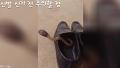 신발 신기 전 주의할 점 외 [일상속꿀잼 세로움짤] 53회 퍼니튜브