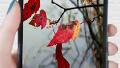 휴대폰 속의 가을 풍경