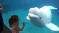 소녀에게 장난치는 흰돌고래