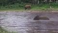 물에빠진사람 구해주는 코끼리