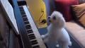 나는 분명 전생에 피아니스트