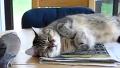 고양이 깨우는 새 ㅋㅋㅋㅋ ^ㅡ^*;