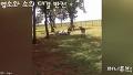 염소와 소의 대결 반전 외 [일상속꿀잼 세로움짤] 35회 퍼니튜브