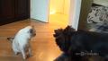 강아지가 그냥 무서웠던 고양이