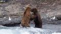 실제 곰 싸움은 처음 봐