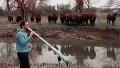 소 앞에서 악기 불었을 뿐인데