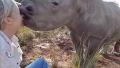 자신을 구조해준 여자요원에게 뽀뽀하는 아기코뿔소